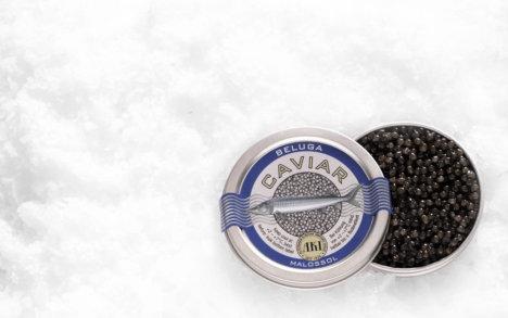 Beluga caviar, Køb Caviar, Køb beluga