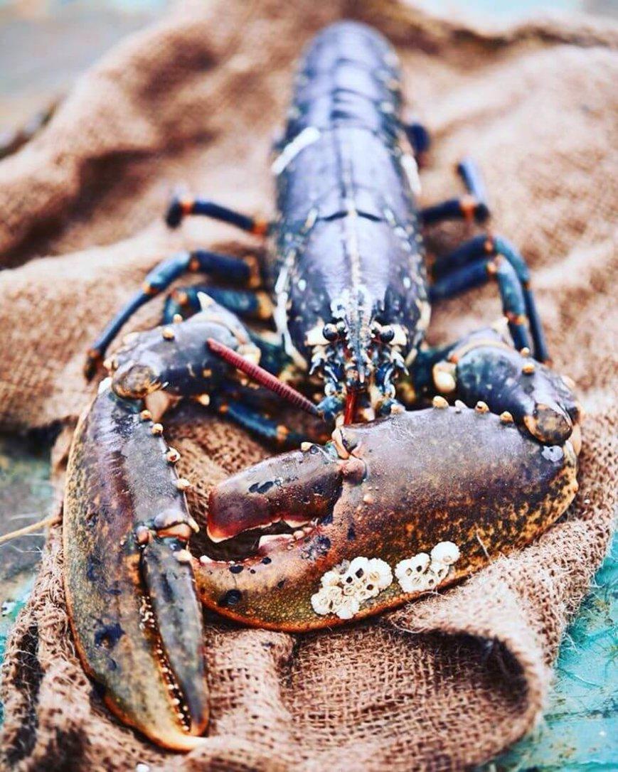 Limfjordshummer_lobster